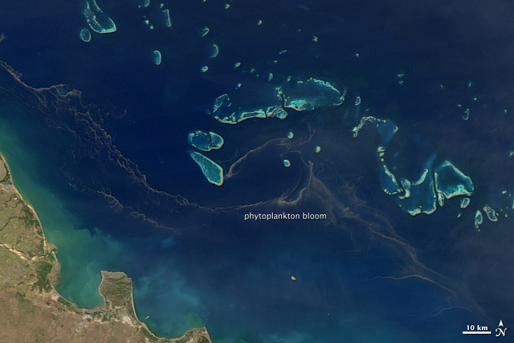 Worksheet. Phytoplankton Bloom in the Great Barrier Reef  Image of the Day