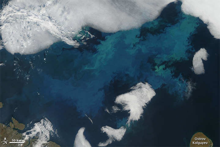 Bloom in the Barents Sea