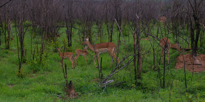 Grassland Restoration in Kruger National Park