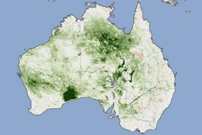 Thick Vegetation Fuels Australia Fires