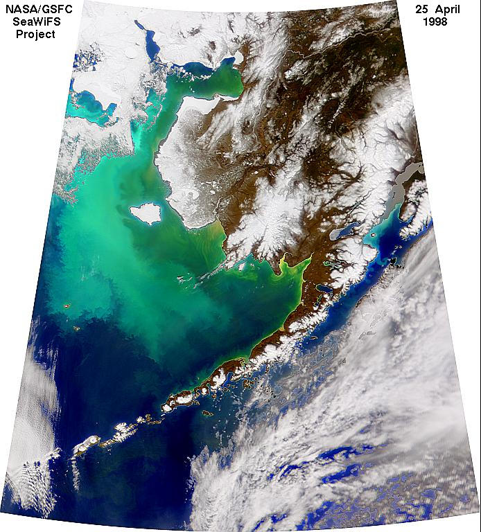 Coccolithophorids in the Bering Sea - related image preview