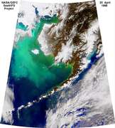 Coccolithophorids in the Bering Sea - selected image