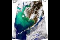 Coccolithophorids in the Bering Sea