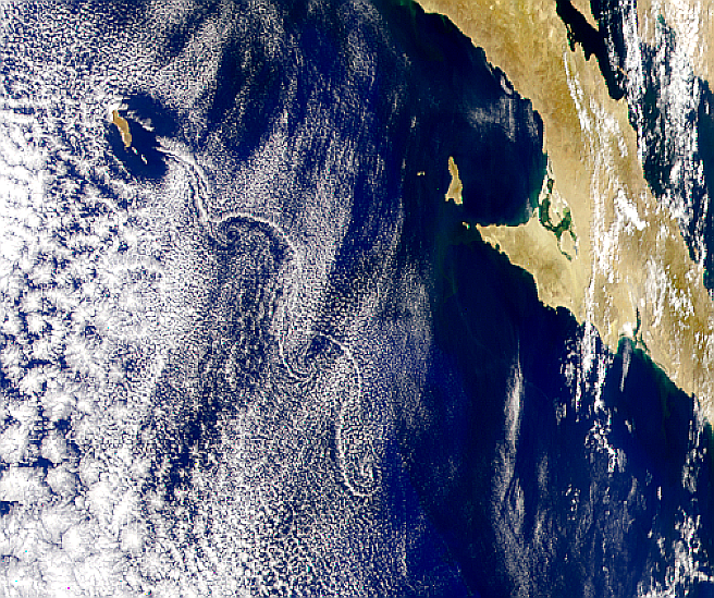 Guadalupe Island Vortex Street - related image preview
