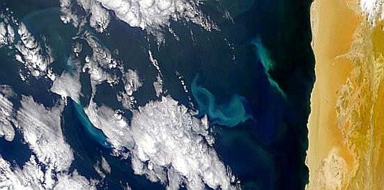 Bright Blooms Off Namibian Coast - related image preview