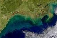 Colorful Gulf Coast
