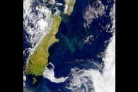 Blooms Off Coast of New Zealand
