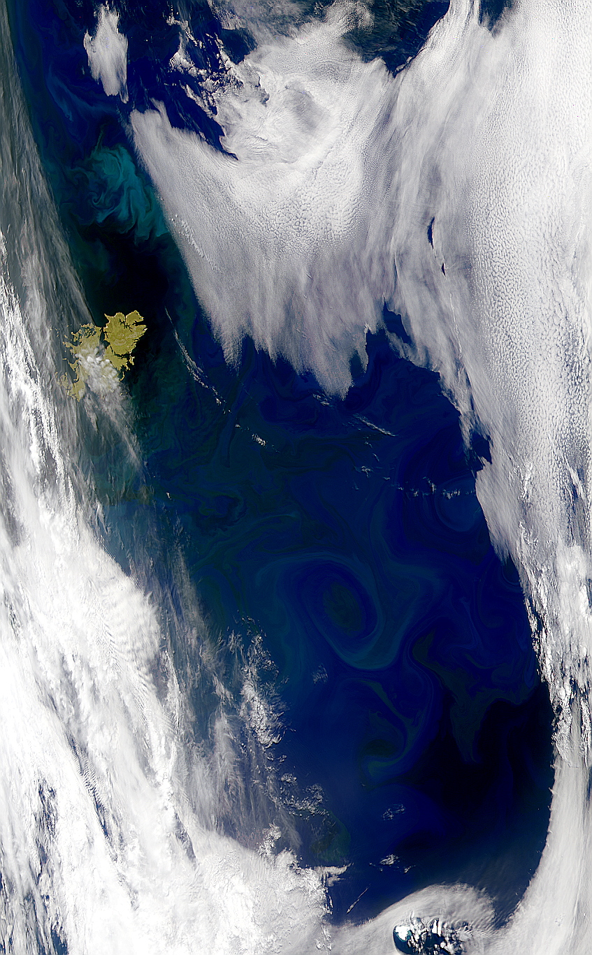 Blooms Around the Falkland Islands - related image preview