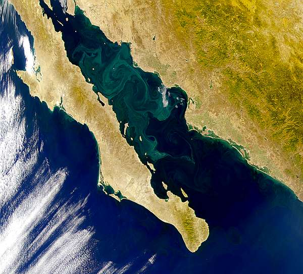 Gulf of California; Sea of Cortez - related image preview