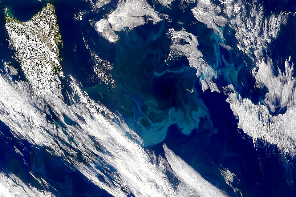 Blooming Tasman Sea - related image preview