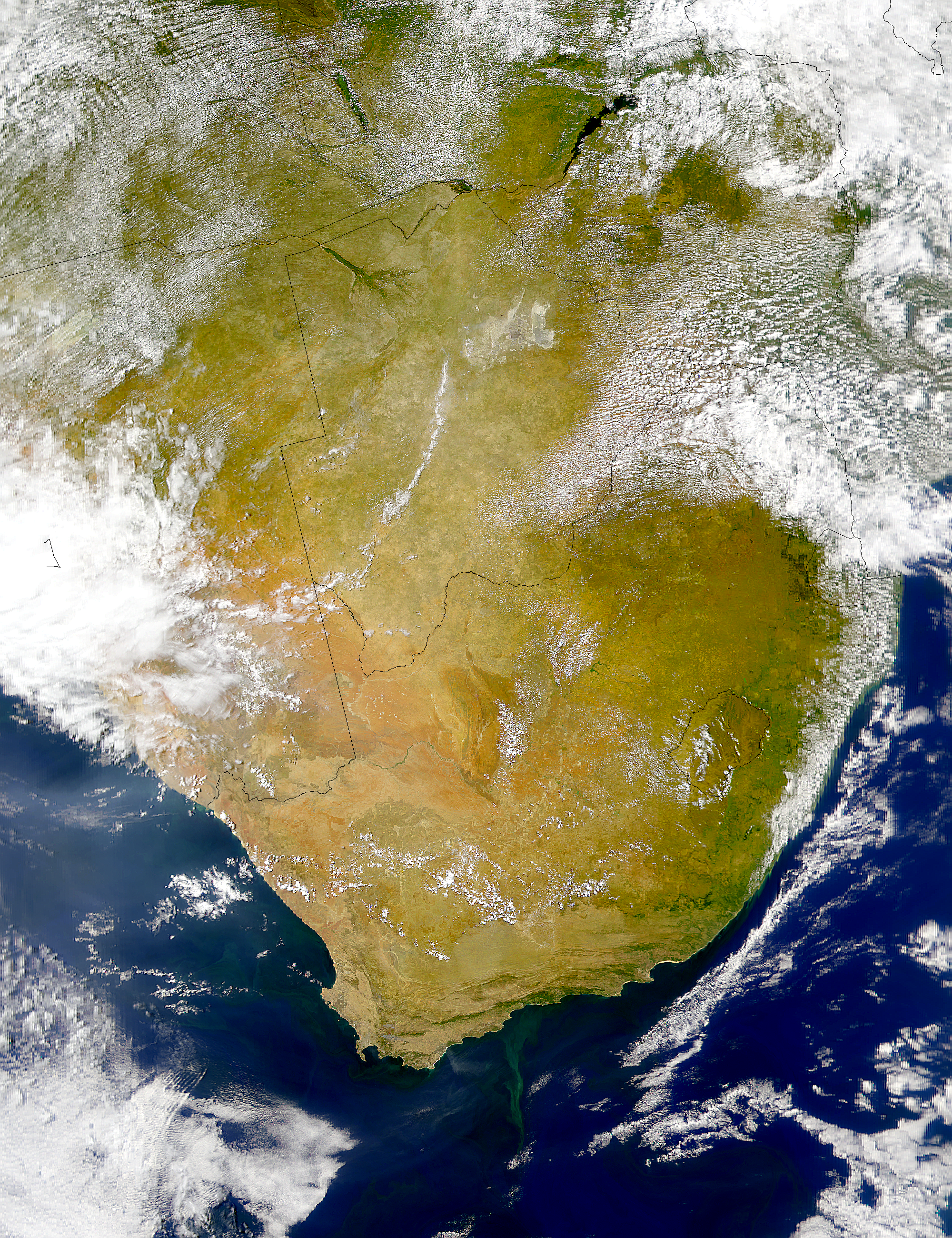 South Africa Phytoplankton - related image preview