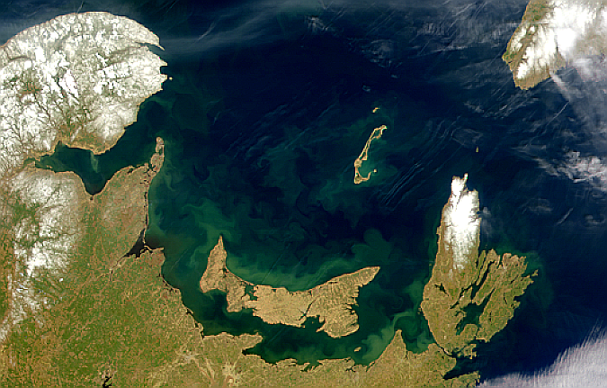 Blooms and Plumes Around Prince Edward Island - related image preview
