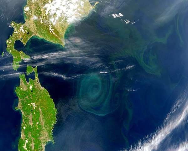 Large Gyre East of Japan - related image preview