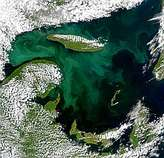 Bright Bloom in Gulf of St. Lawrence - selected image