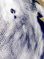 Guadalupe Island Vortex Street - selected image