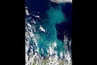 Barents Sea Bloom