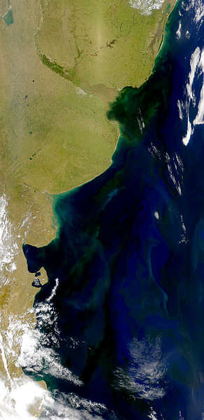 Argentine Coastal Blooms - related image preview