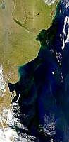 Argentine Coastal Blooms - selected image