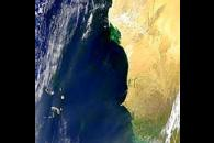 Blooms and Plumes Off Western Africa