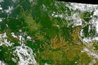 Rondonia Deforestation