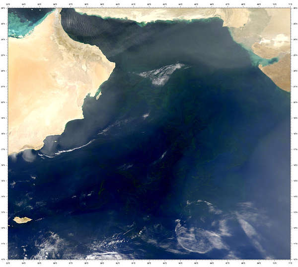 Arabian Sea Blooms - related image preview