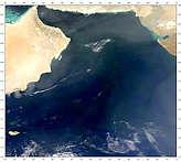 Arabian Sea Blooms - selected image