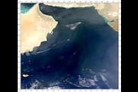 Arabian Sea Blooms