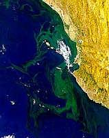 Puerto Vallarta Bloom - selected image
