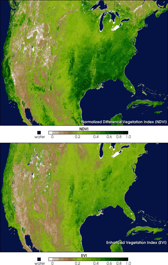 Spring Vegetation in North America - related image preview