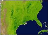 Spring Vegetation in North America - selected image