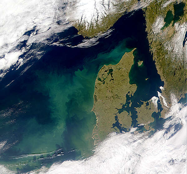 North Sea Bloom - related image preview