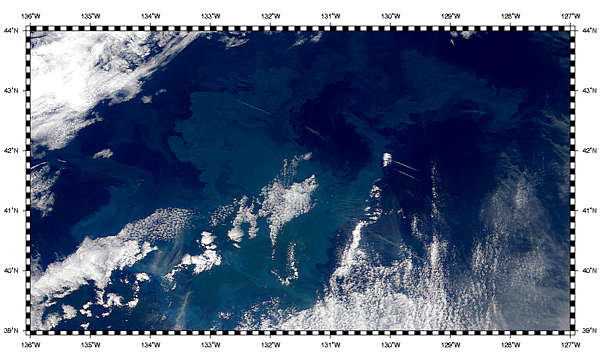 Northeast Pacific Ocean Bloom - related image preview