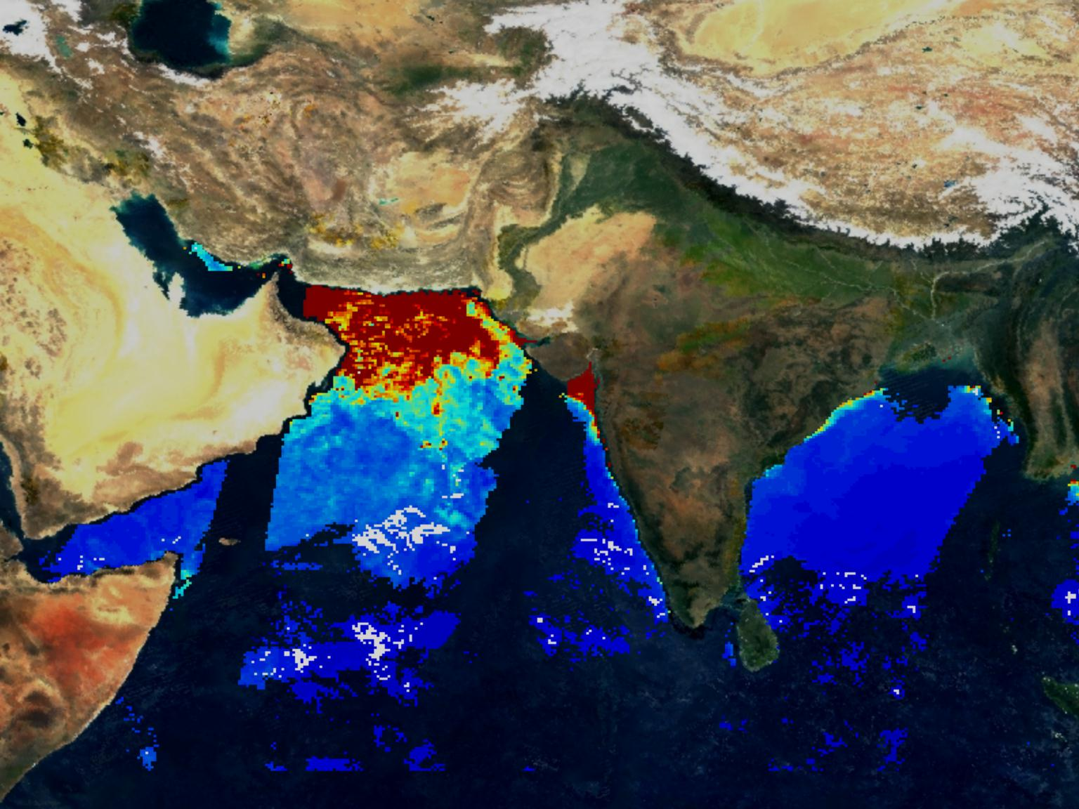 MODIS Chlorophyll from Indian Sub-continent - related image preview