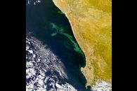 South Africa Algal Bloom