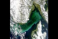 Phytoplankton Bloom in Skagerrak