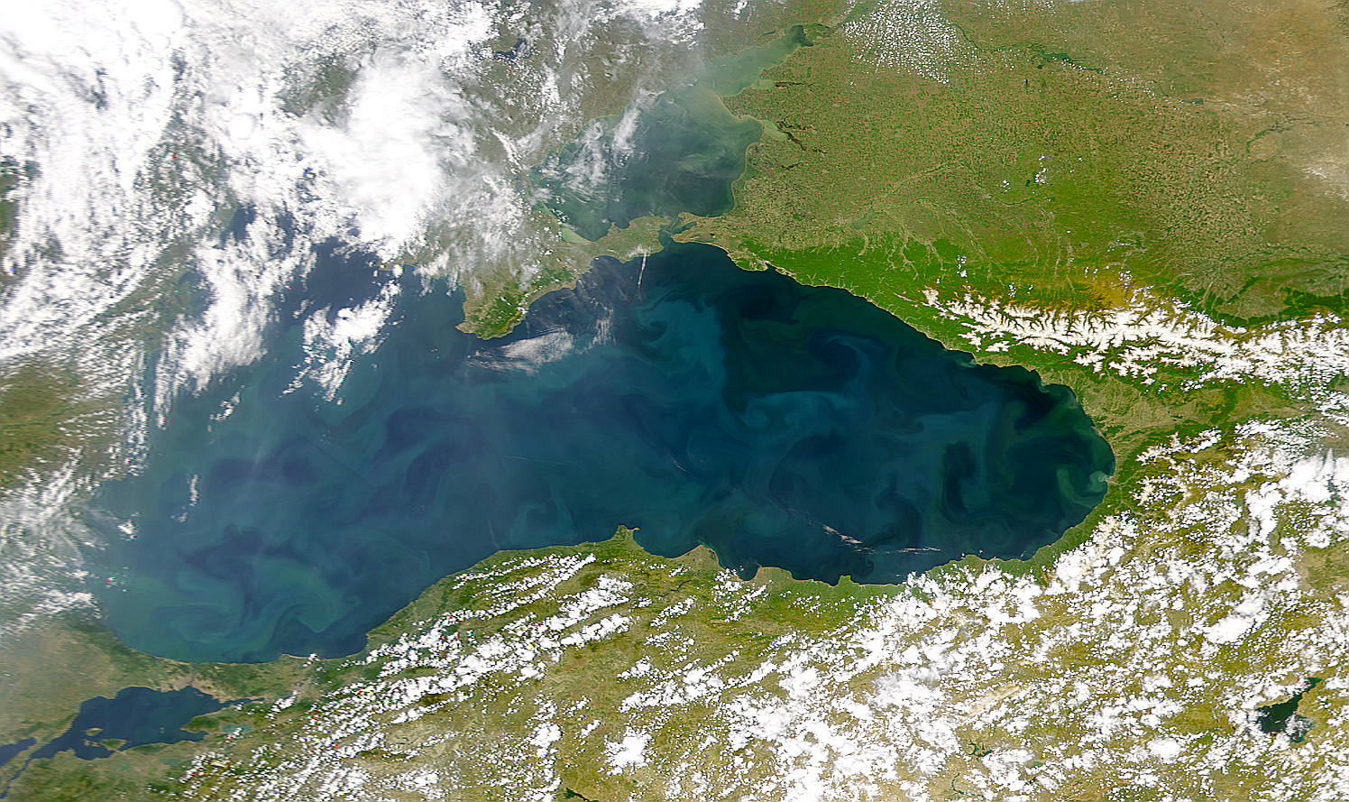 Black Sea Bloom - related image preview