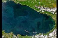 Black Sea Bloom