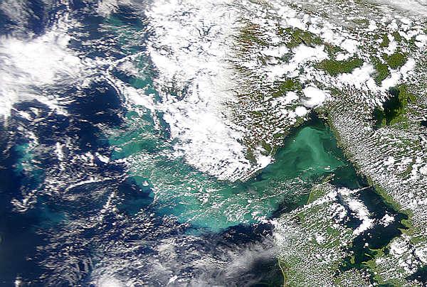 Phytoplankton Bloom in Skagerrak Intensifies - related image preview