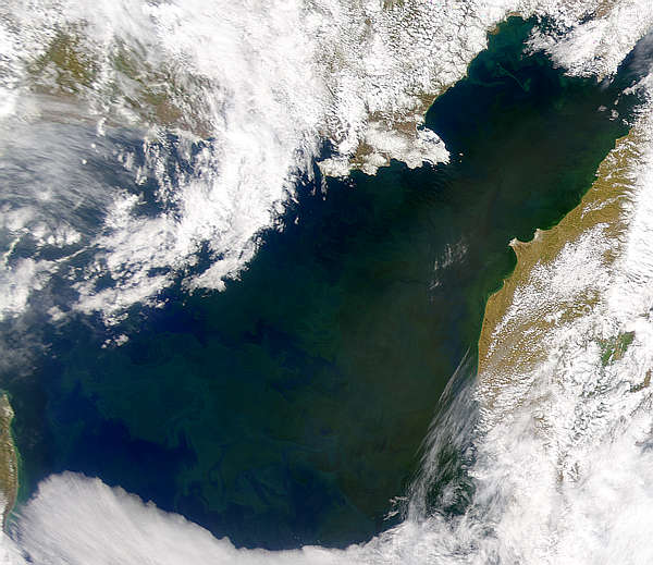 Bloom in Sea of Okhotsk - related image preview