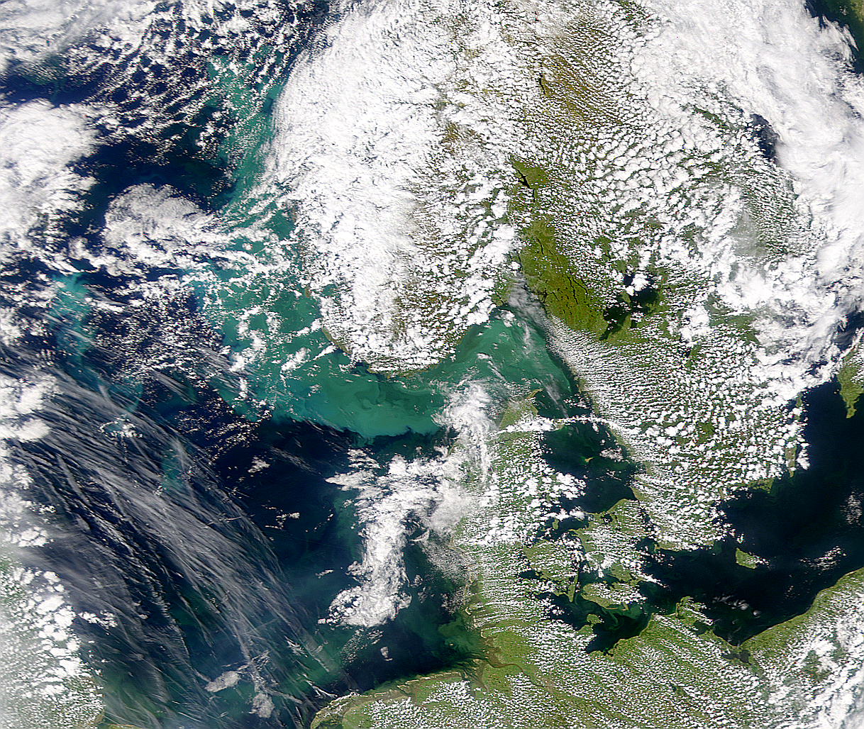 Phytoplankton Bloom in Skagerrak - related image preview