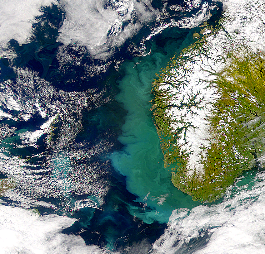 Bloom Off Norway Continues - related image preview