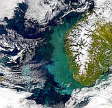 Bloom Off Norway Continues - selected image