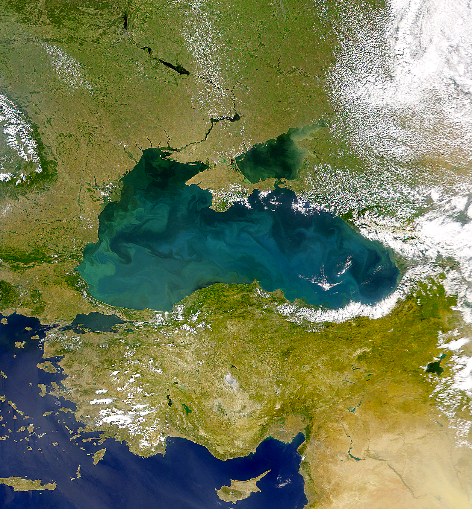 Blooming Black Sea - related image preview