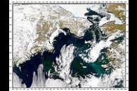 Color Difference in Bering Sea Phytoplankton Blooms