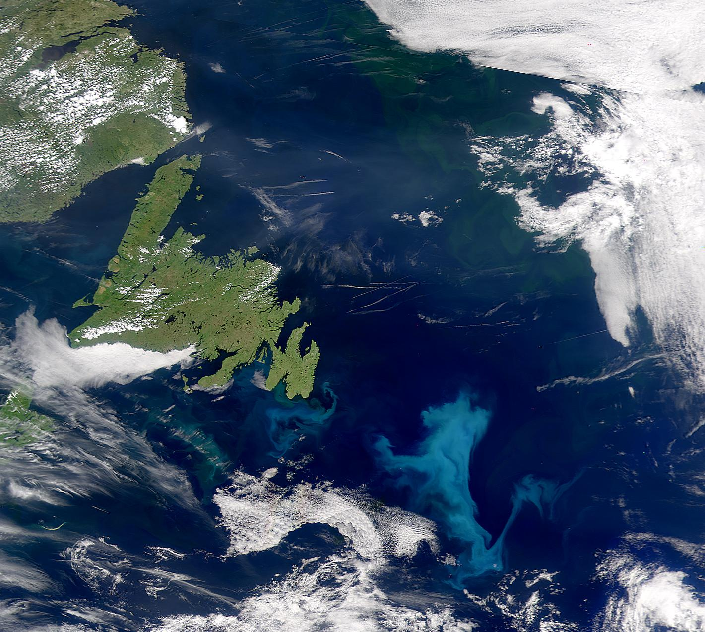 Phytoplankton Bloom off Grand Banks - related image preview