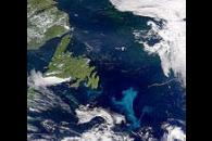 Phytoplankton Bloom off Grand Banks