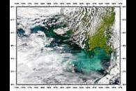 Phytoplankton Bloom in Bering Sea