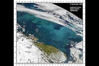 Barents Sea Bloom