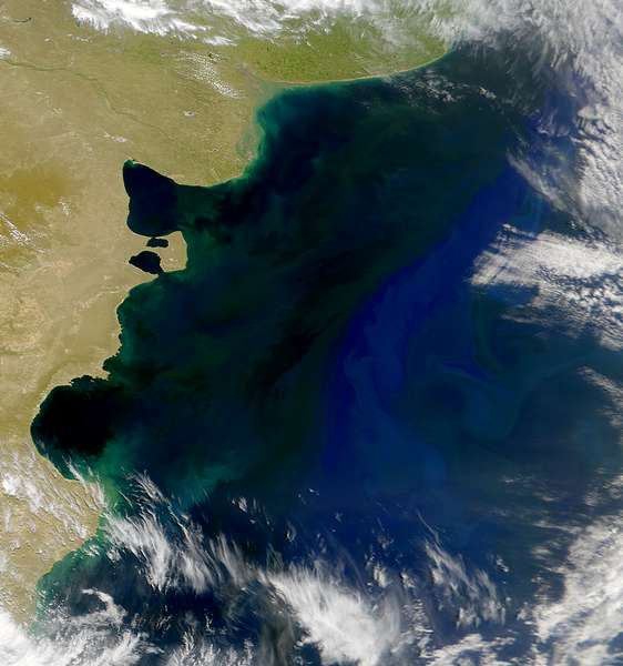 SeaWiFS: Patagonian Shelf - related image preview