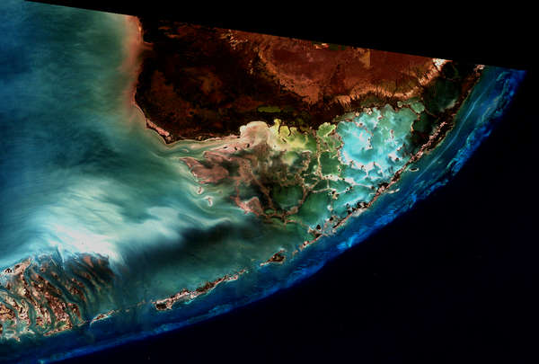 Calcium Communities: Florida Keys - related image preview